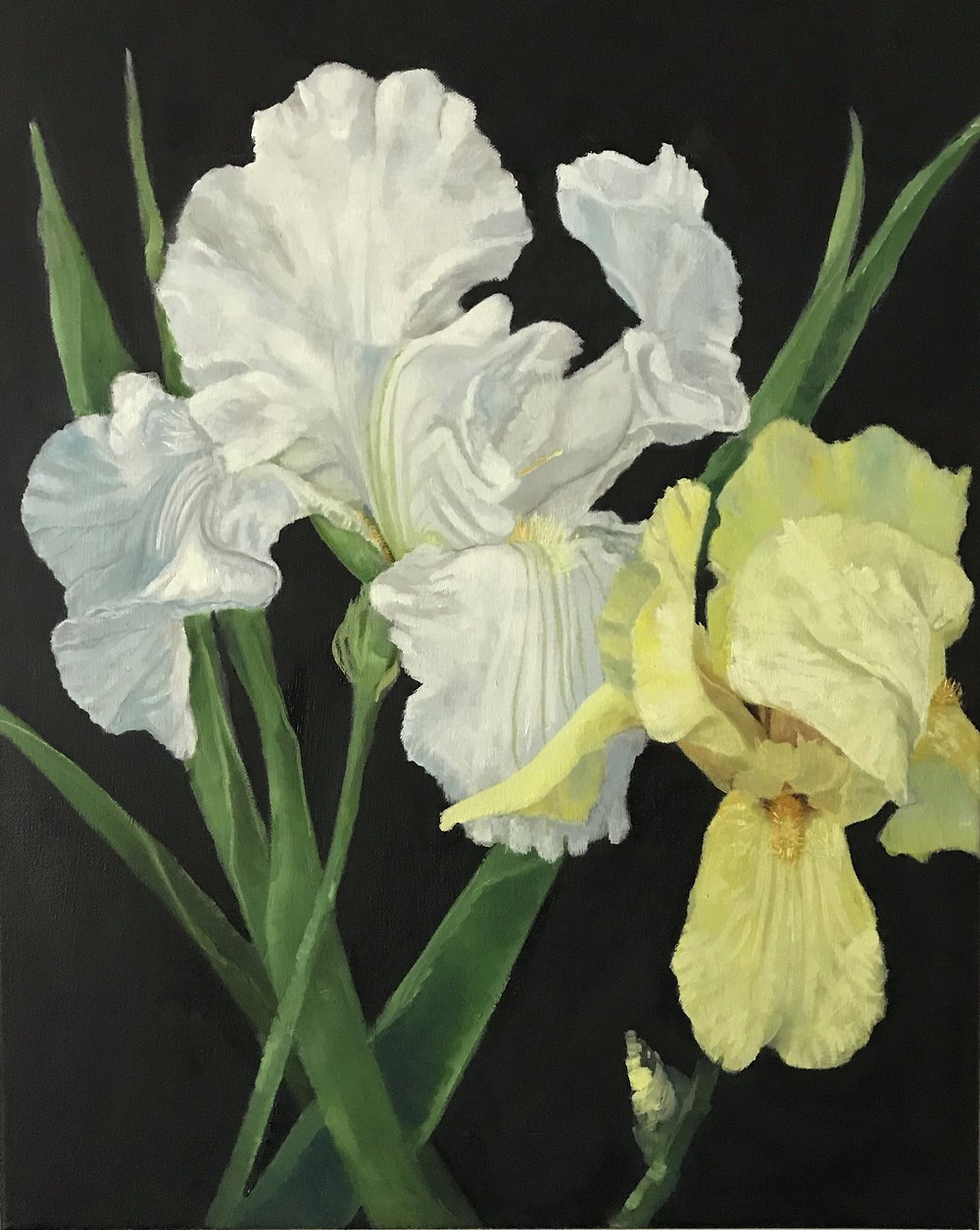 White & Yellow Irises  oil on canvas