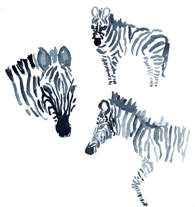zebras_clean.jpg