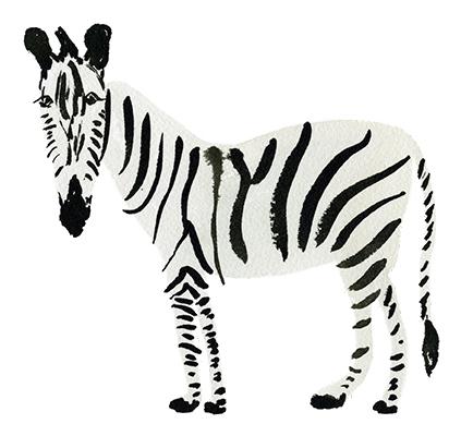 Zebra039_web3.jpg
