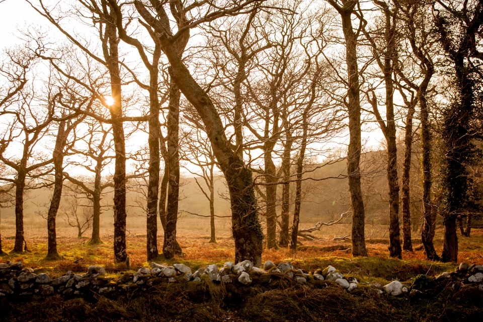 The Woods, Mayo, Ireland © Kevin Kerr Photography