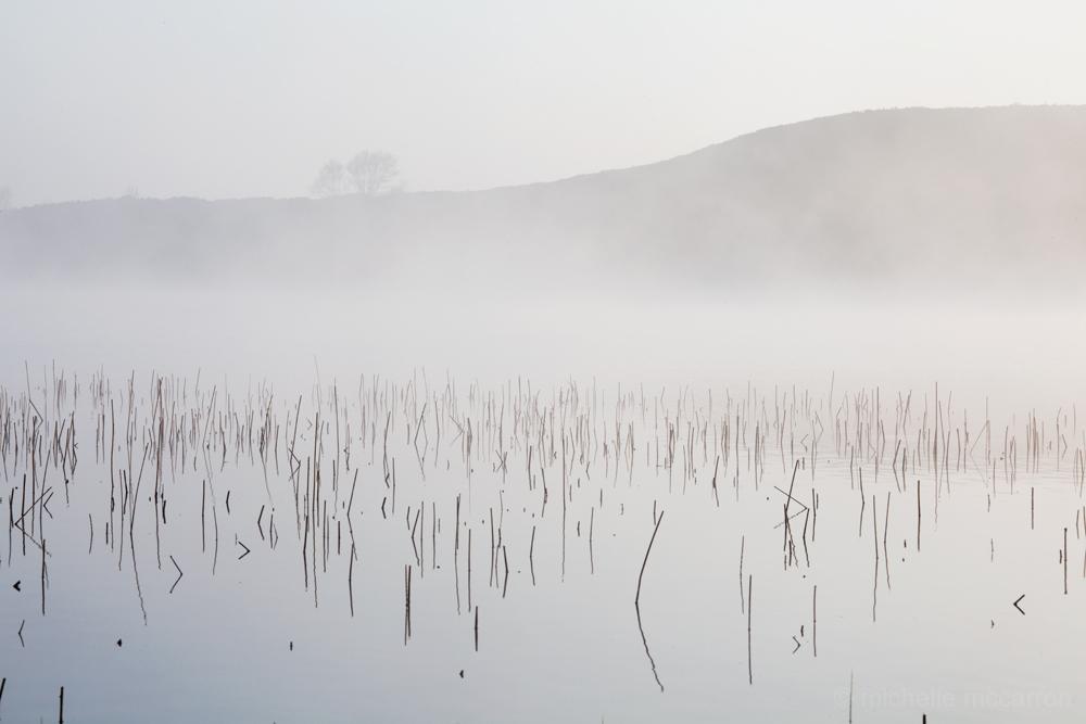 Japan Mist. © Michelle McCarron