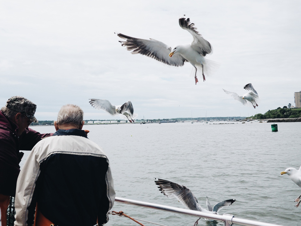 {Seagulls flocking to the boat because of the used bait. They hung around the boat because they knew food was coming.}