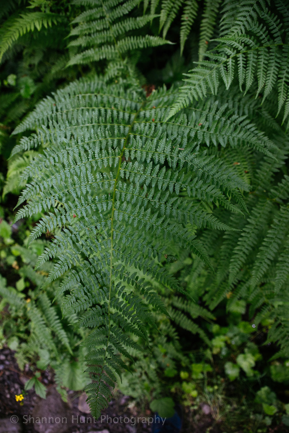 I've had a fascination with ferns since I was a kid.