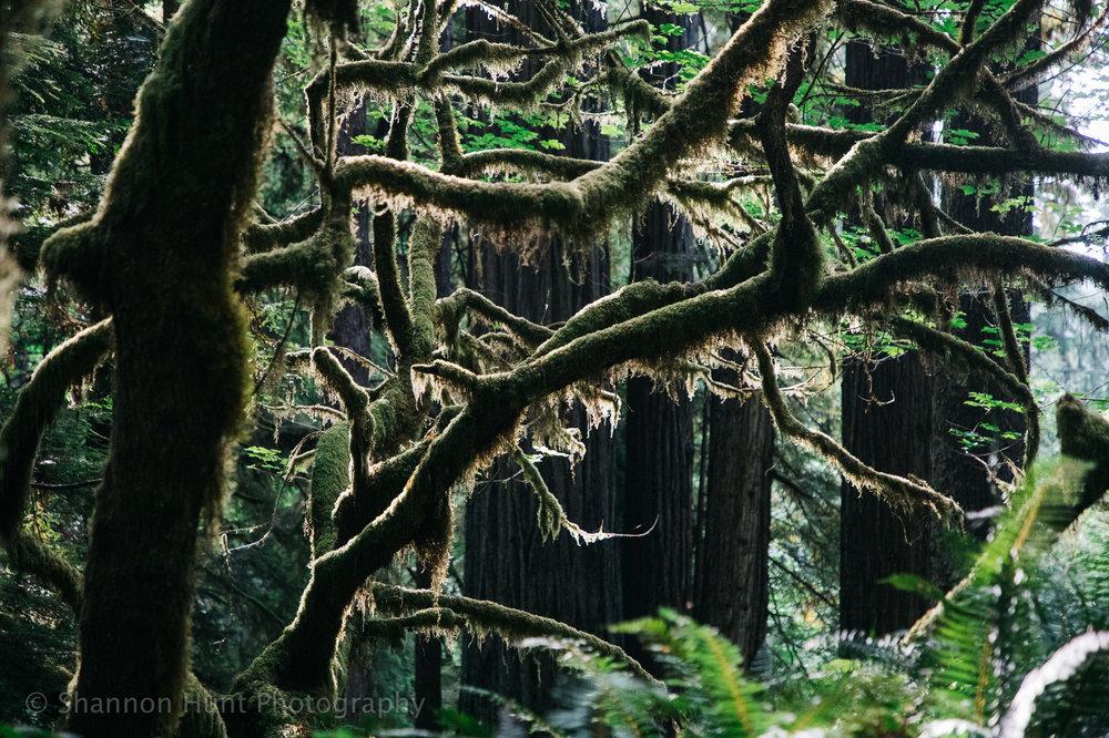 More furry trees.