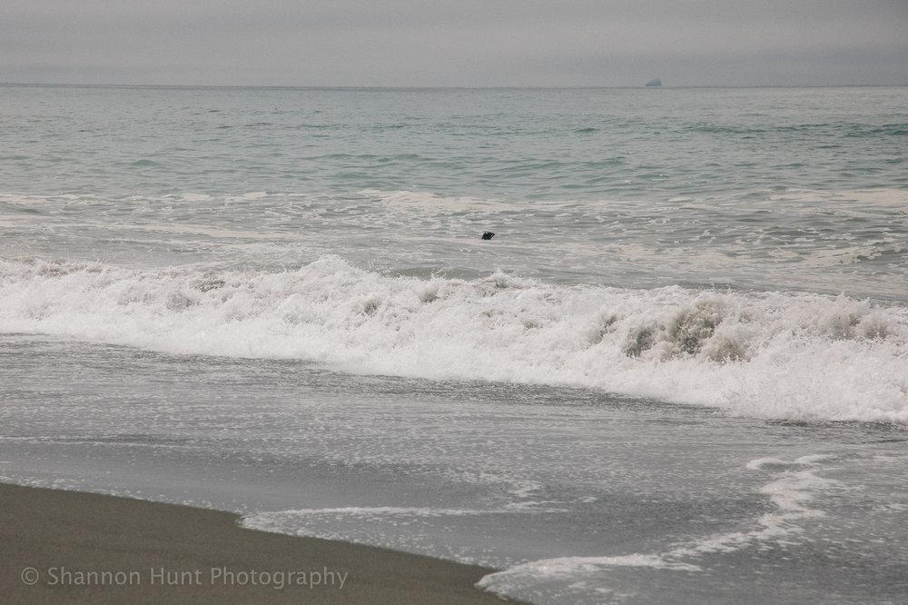 Hi seal!