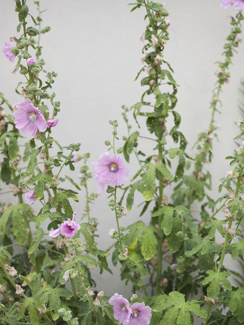 flowers_091446.jpg