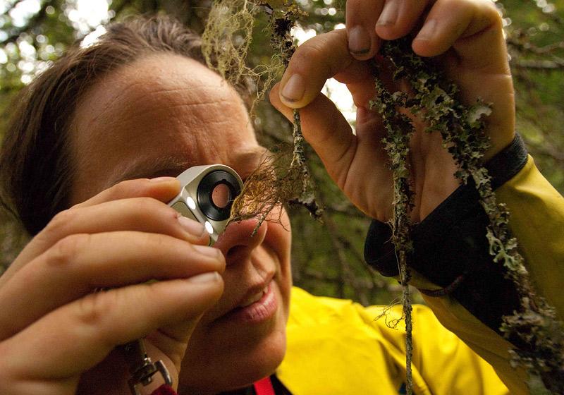 Sweden's Green Veneer Hides Unsustainable Logging Practices