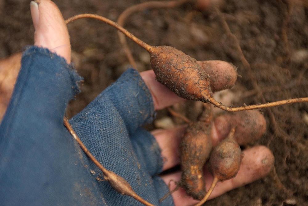 groundnuts-1-2.jpg
