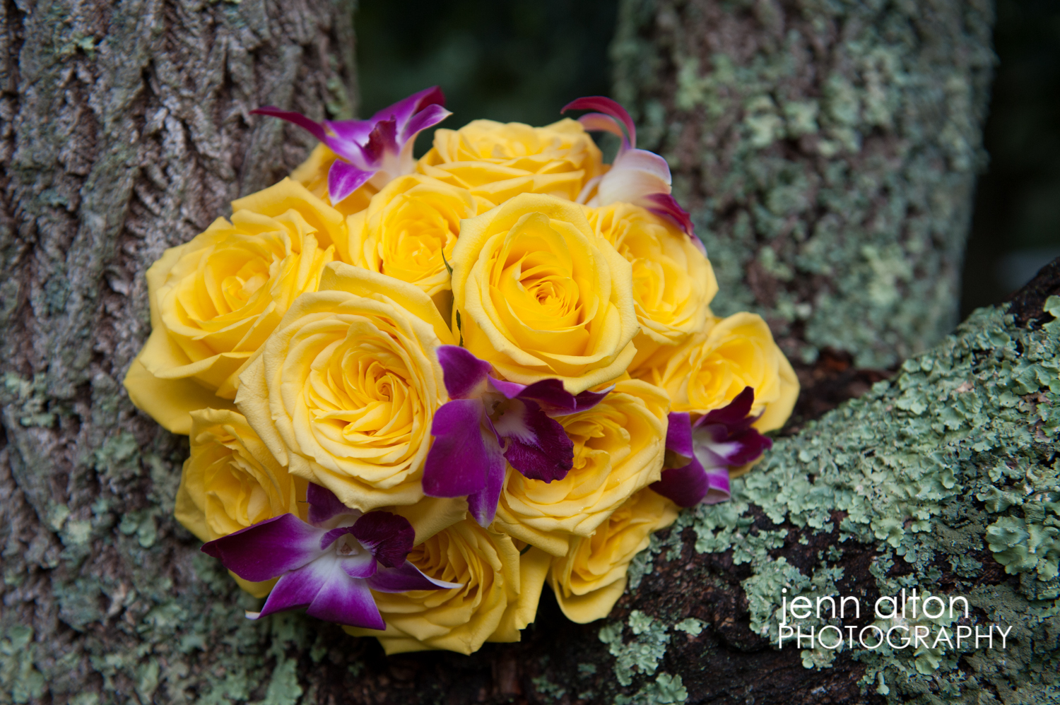 Yellow roses and purple orchids bridal bouquet, cape cod wedding
