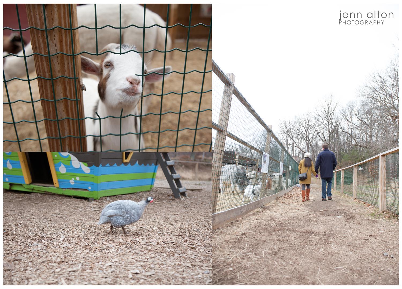 Petting Zoo, Smolak Farm, North Andover