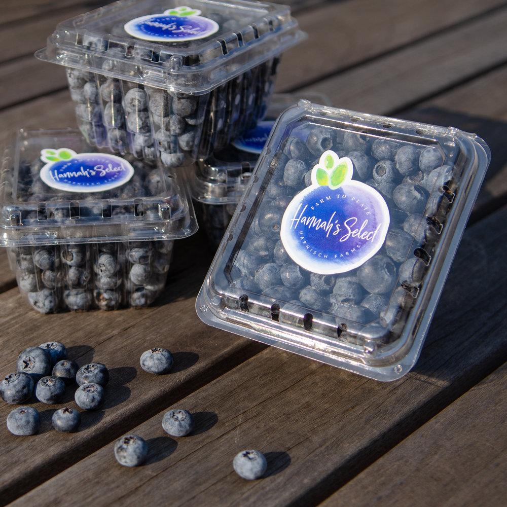 HS Blueberries-1.jpg