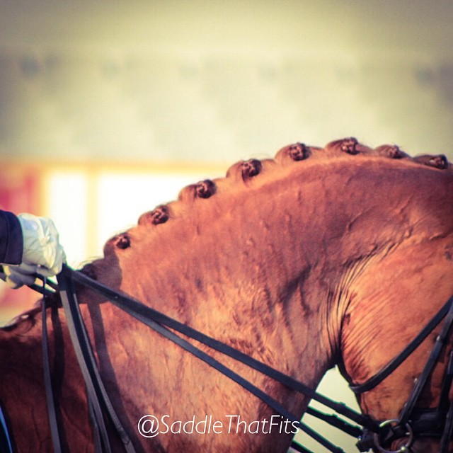 The first step in getting anywhere is to decide you are not willing to stay where you are. #dressagerider #dressage #horsesoninstagram #love #horses @SeventeenSaddle