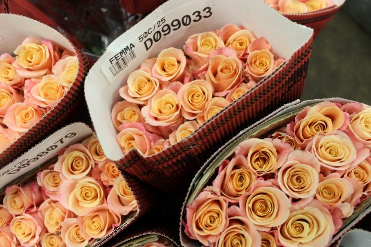 Femma Roses