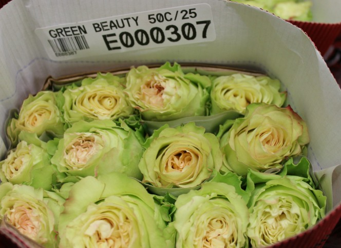 Green Beauty Roses