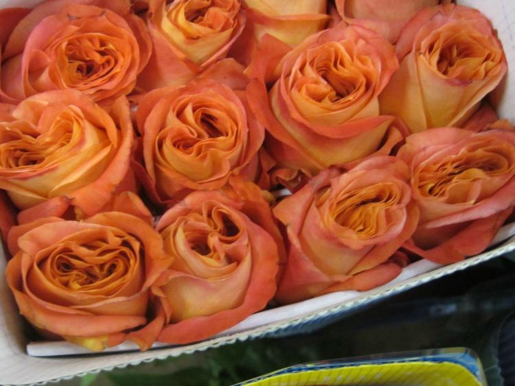 Wild Spirit Roses