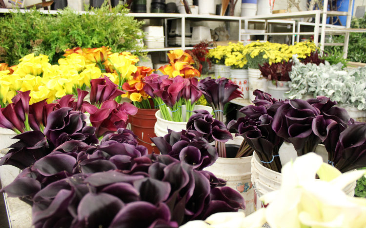 More California Grown Callas
