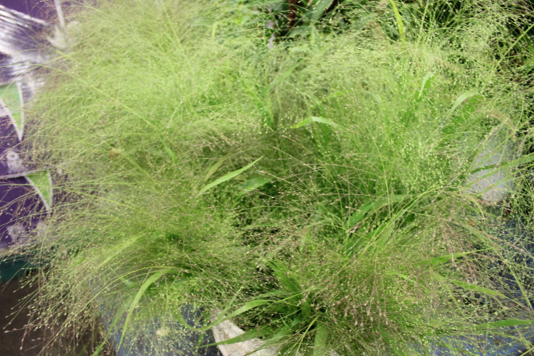 Explosion Grass