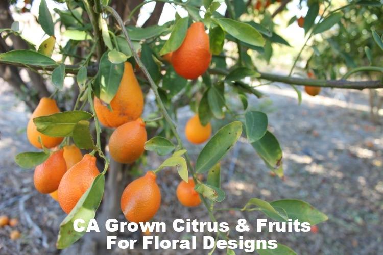 Kumquats (1).jpg