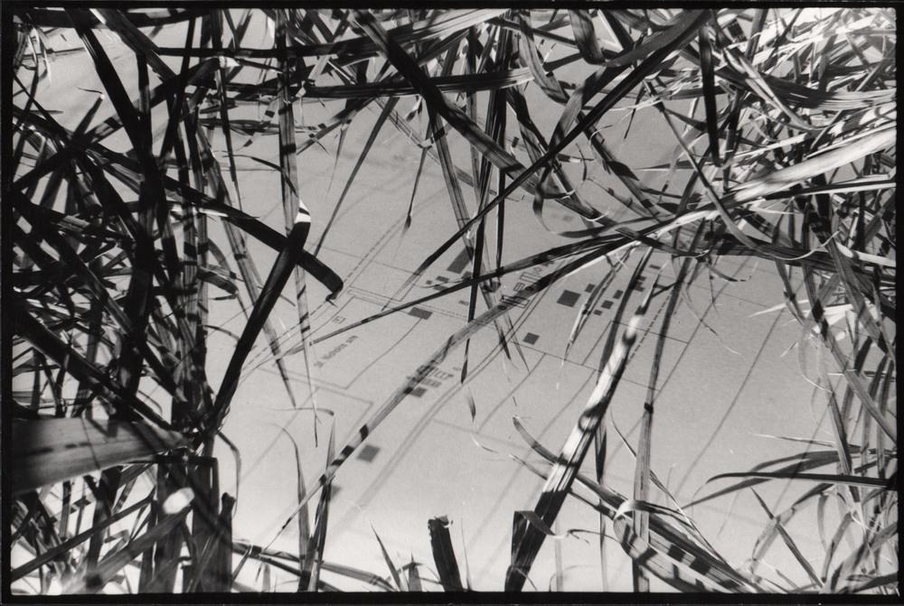 sugar cane double exposure2.jpg