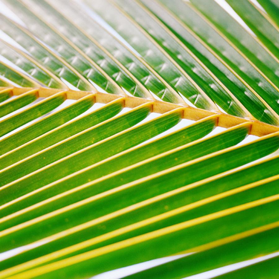 palmclose.jpg