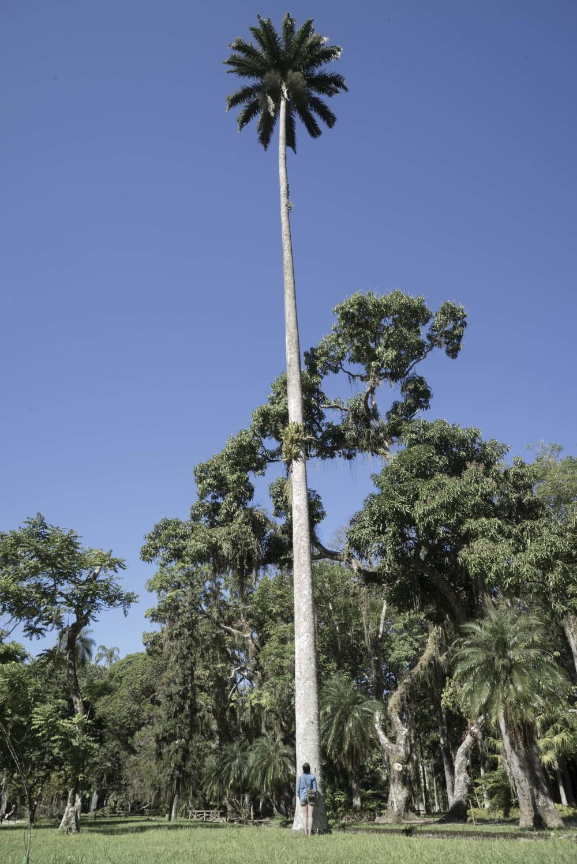 abby_tree