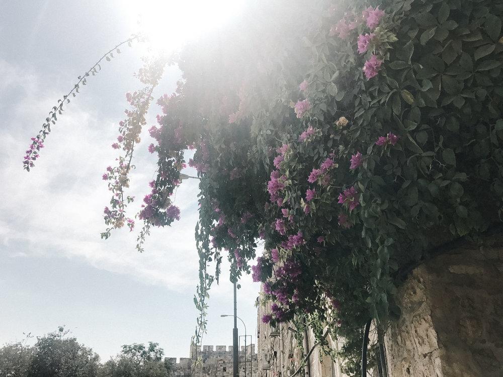 israelblog-110.jpg