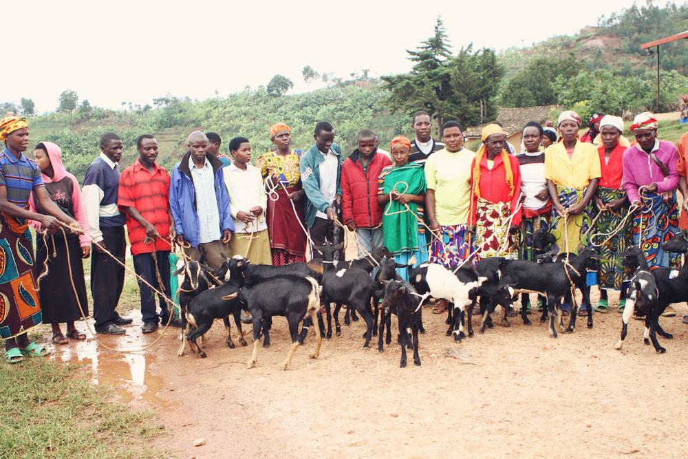 goat5.jpg