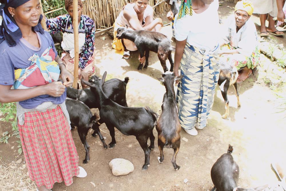 goats8.JPG