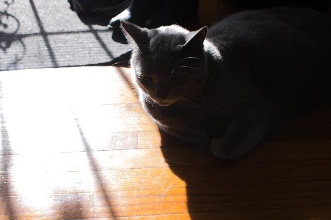 orion-sunlight