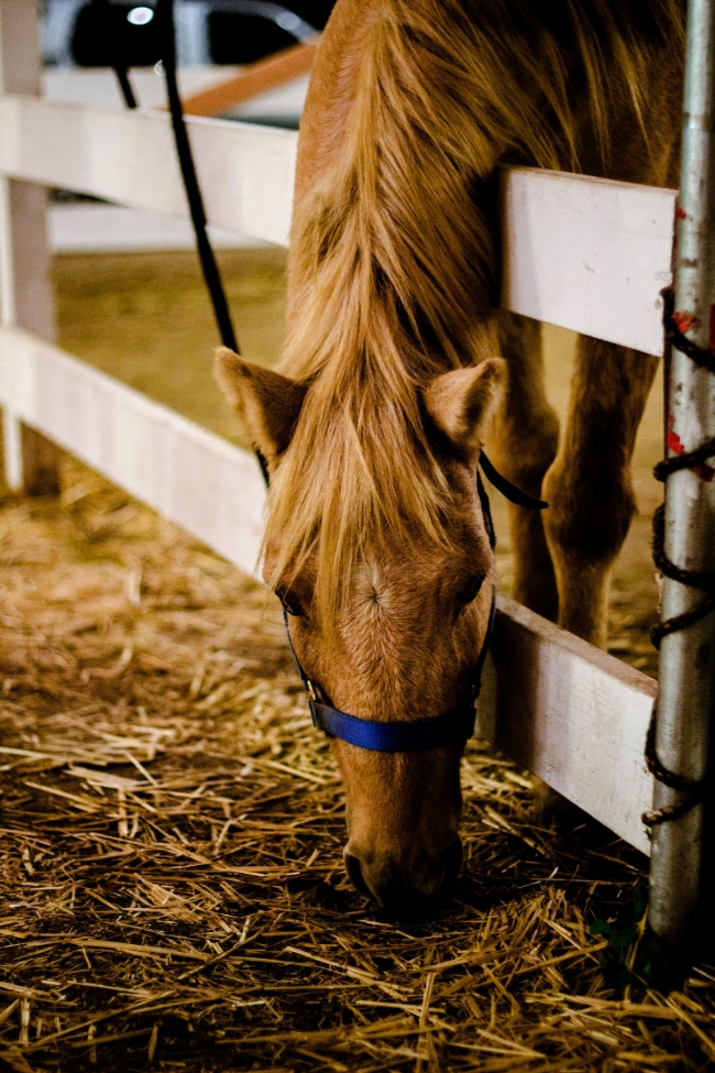 Pony at the pumpking patch in South Bay | fit for the soul