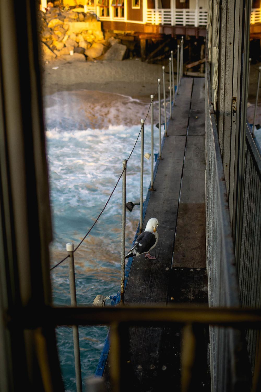 Redondo Beach Pier Seagull.jpg