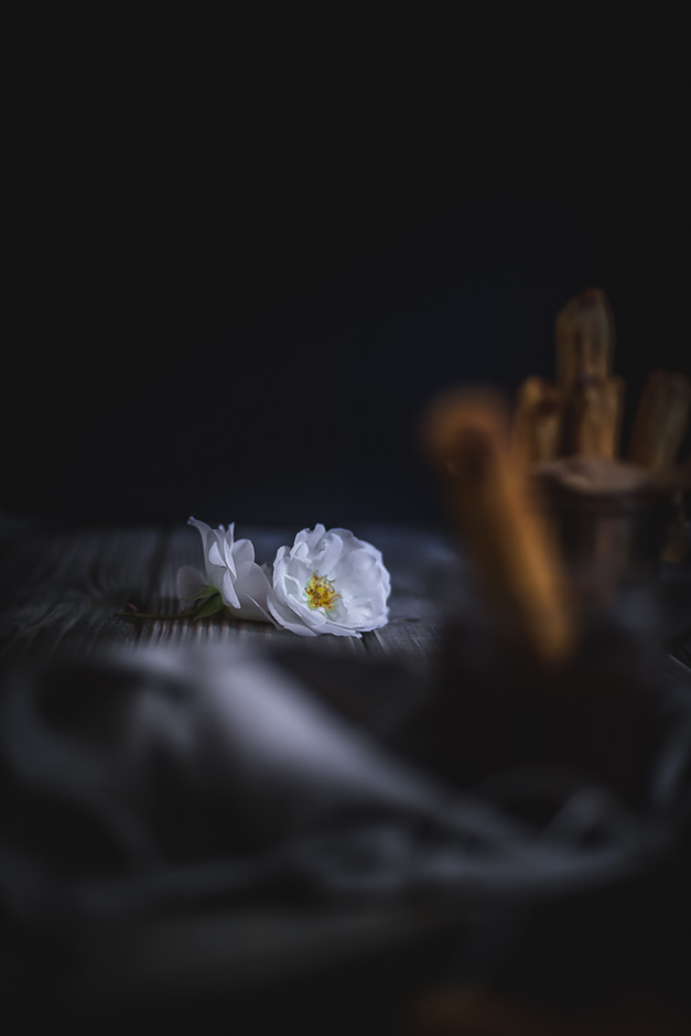 Dark moody flower photography | from scratch, mostly