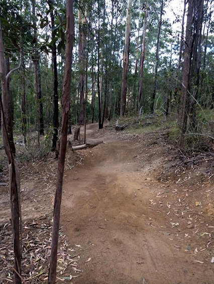 Bago mountain bike track