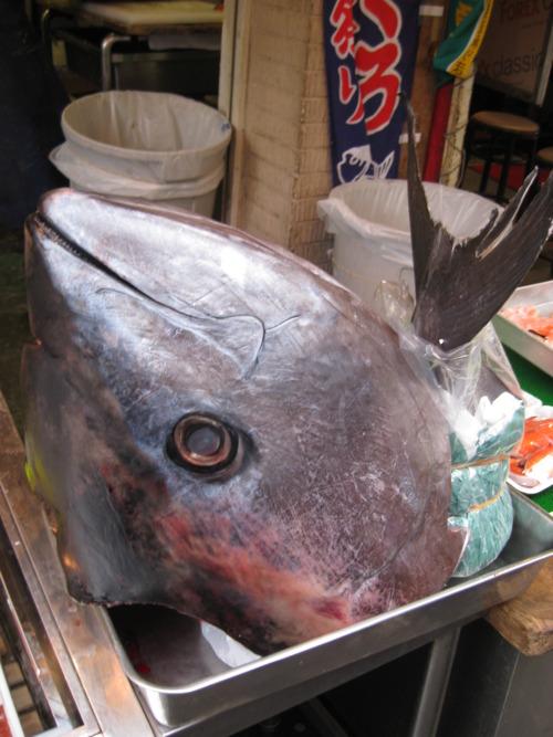 3. The size of this tuna in Tsukiji