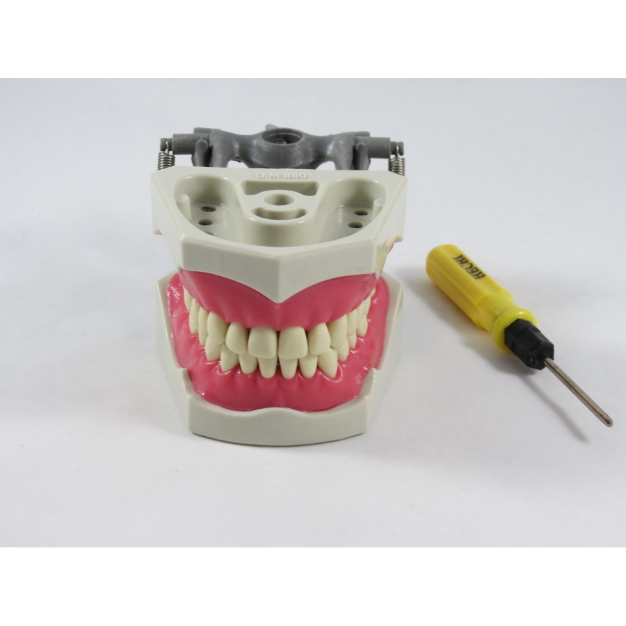 A typical practice model used in dental education. It helps simulate the restraints and difficulties of working on a real patient.