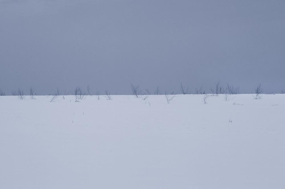 snow_0306 flak.jpg