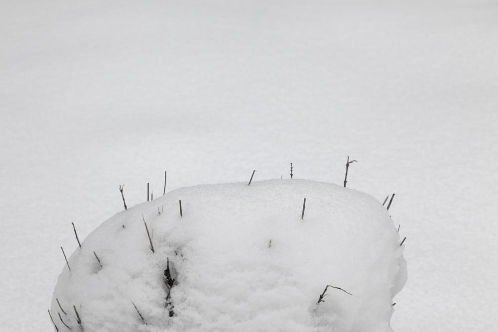 Snow_6487 copy.jpg