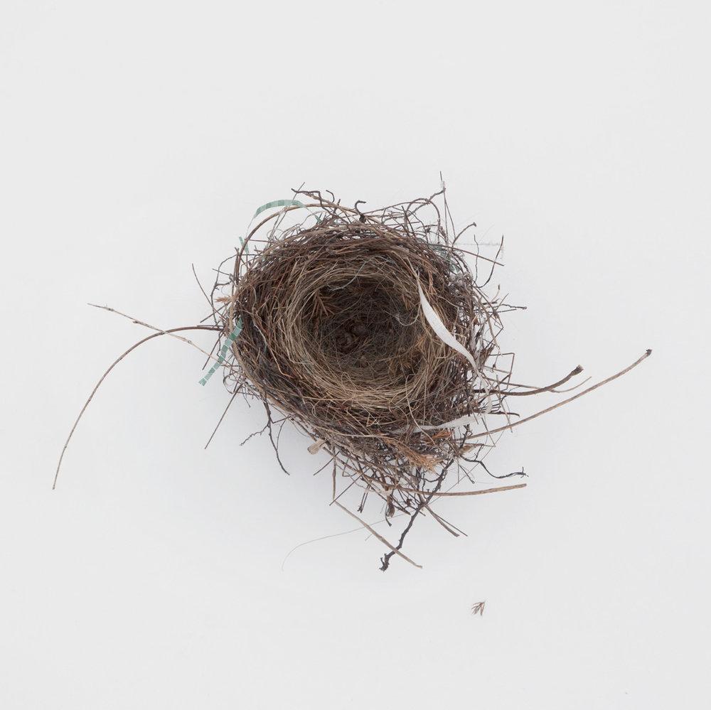 Nest-1797 copy.jpg