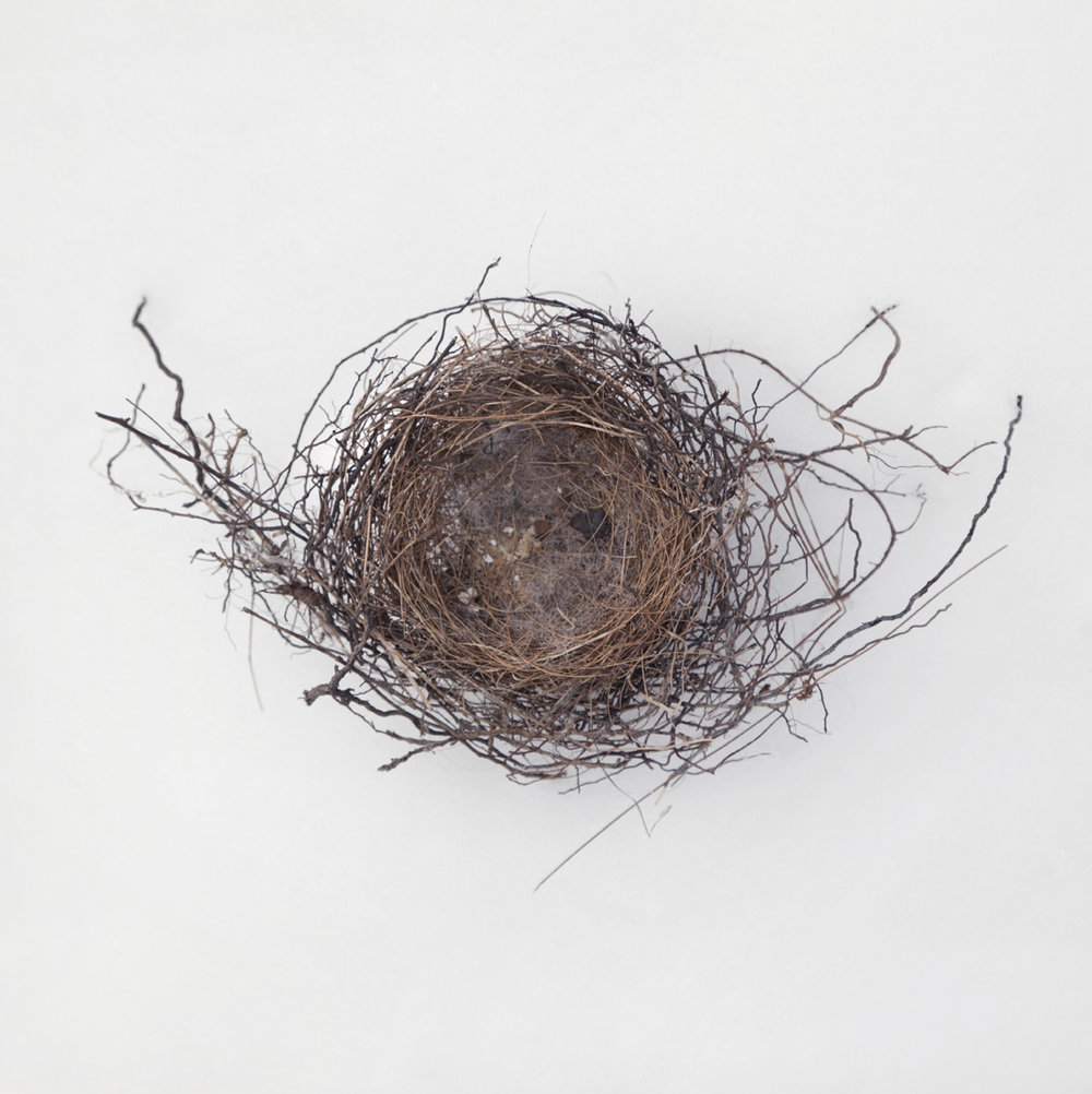 Nest-1750 copy.jpg