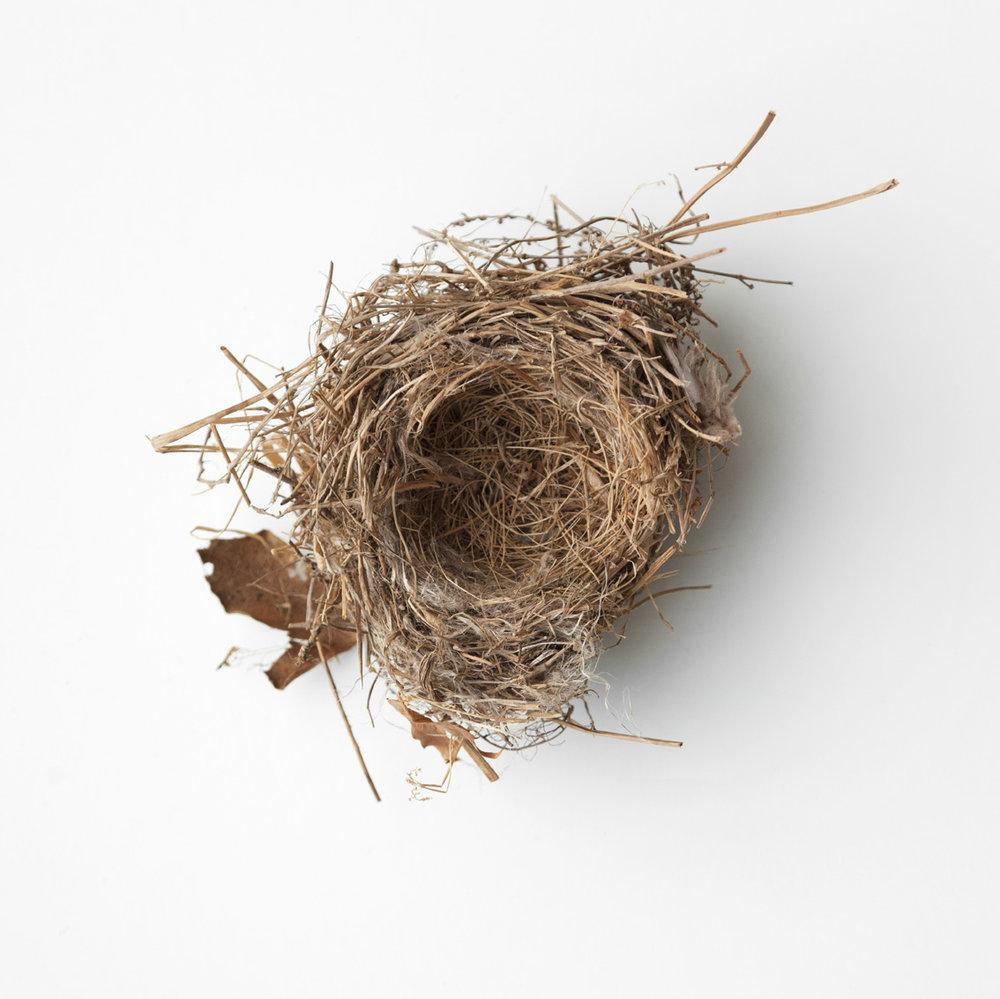 Nest-2554 copy.jpg