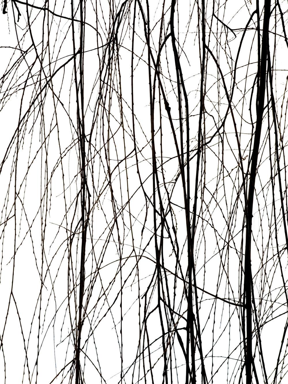 willow 3_0065 copy.jpg