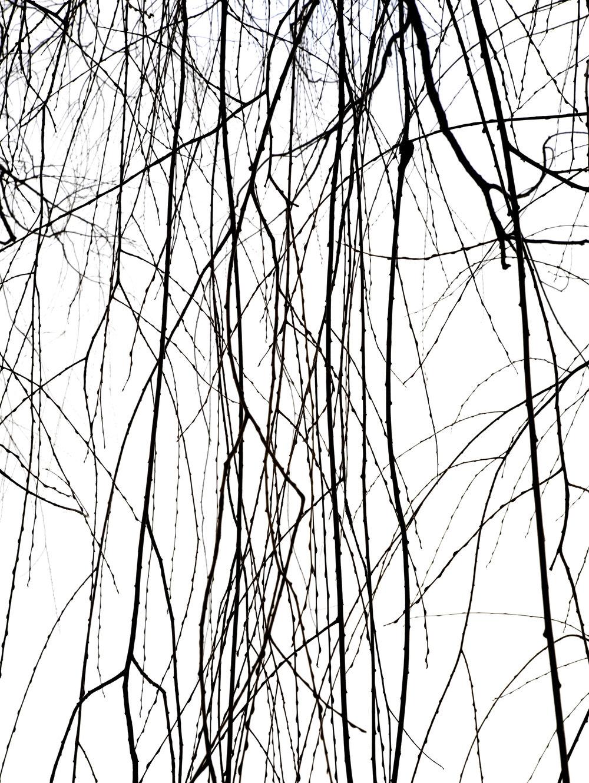 Willow_0069.final copy.jpg