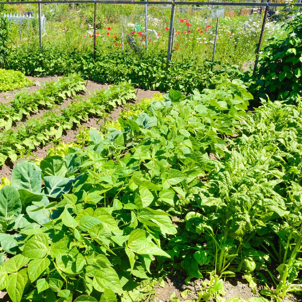 comm-garden.jpg