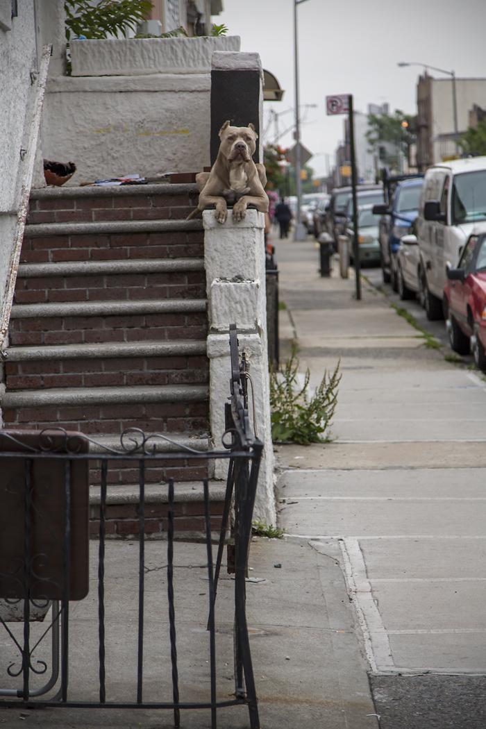 a-dogs-house.jpg