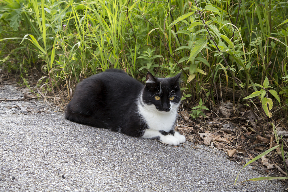 Blades-Of-Grass-Cat-Hallstatt-Austria.jpg