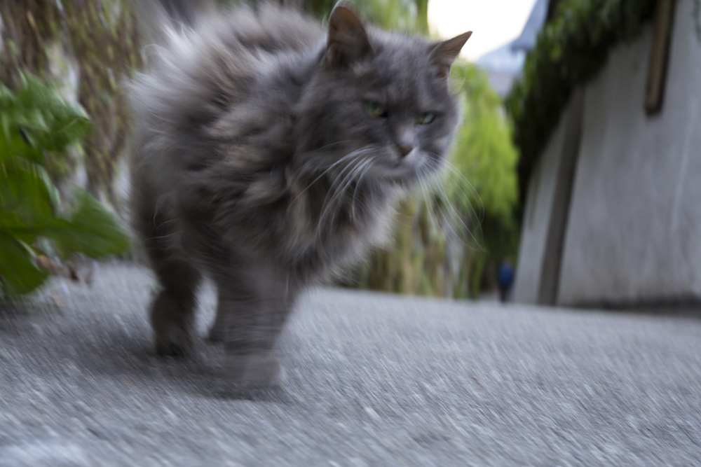 Blurry-Cat-In-Hurry-Hallstatt-Austria.jpg