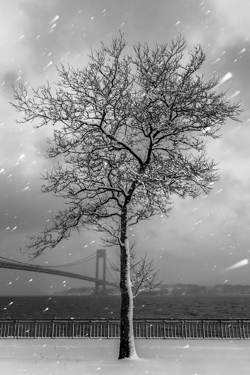 Snow Tree Black and White.jp.jpg