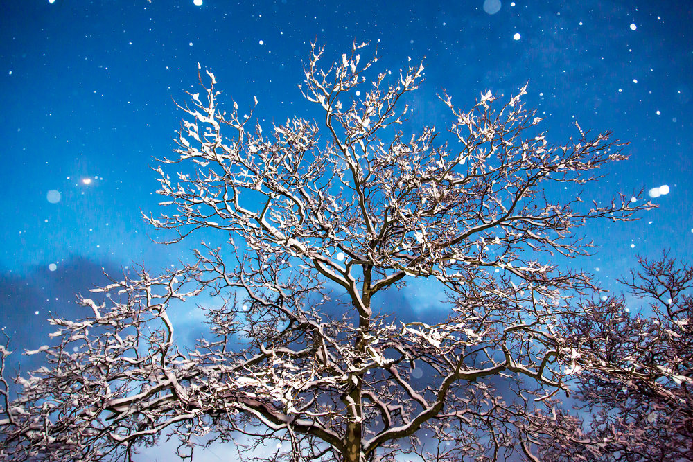 Starry Night Snow Tree - Bay Ridge, Brooklyn, 2014