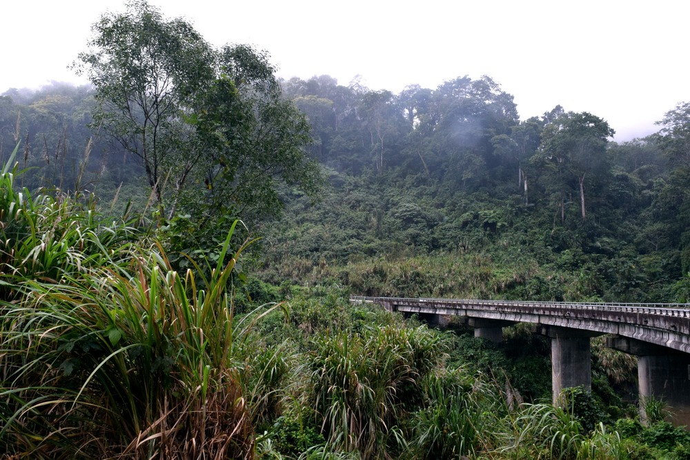 Foggy jungle road on the Ho Chi Minh Trail