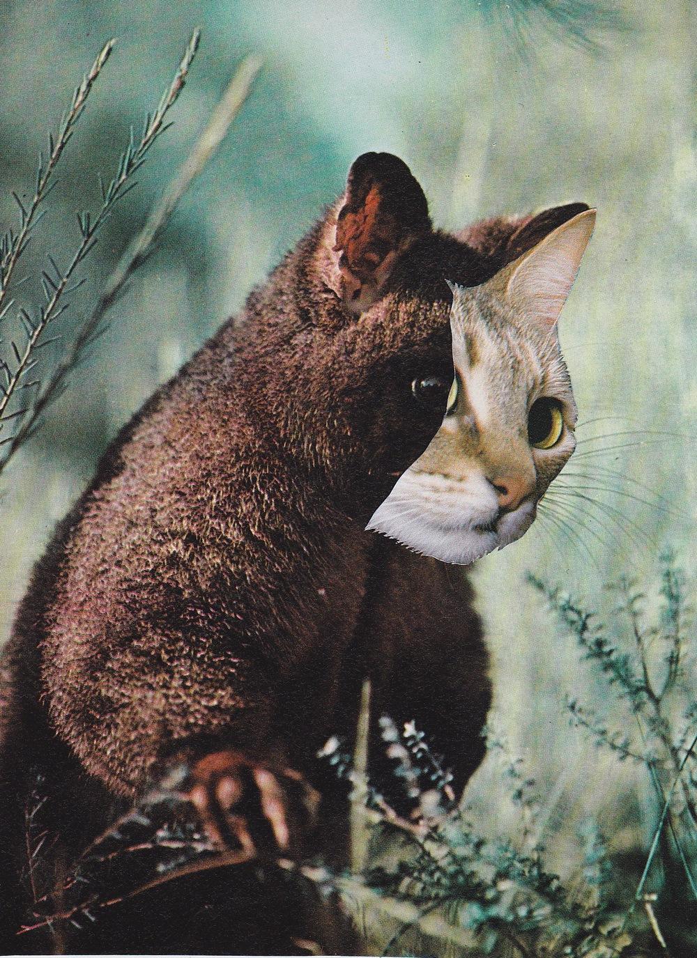 possumcat.jpg